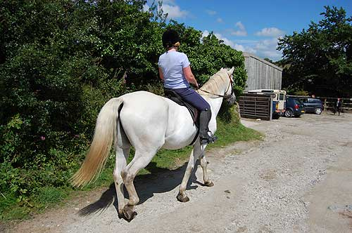 more about Barguse Riding centre>>